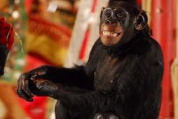 Foto (Foto: O macaco Xico, na vida real, é uma fêmea: Kate)