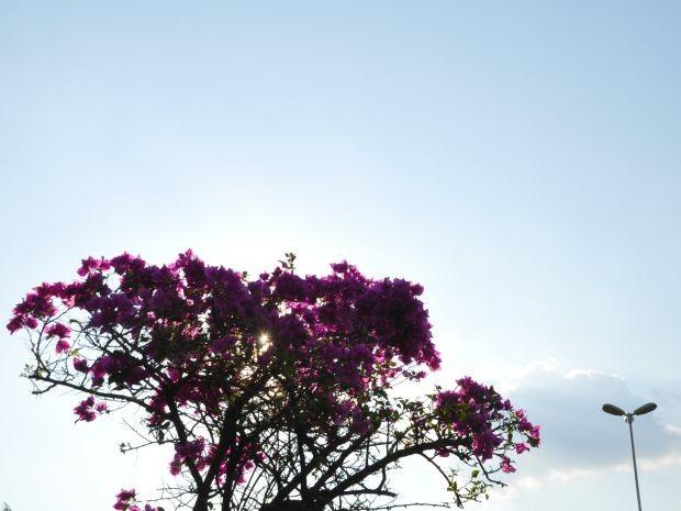 Céu ensolarado em Campo Grande nesta sexta-feira (Foto: Isabela Cavalcante/ G1 MS)