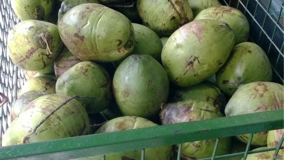 Casca de coco pode ser usada em geradores de energia urbanos, diz pesquisa da Unicamp (Foto: BBC)