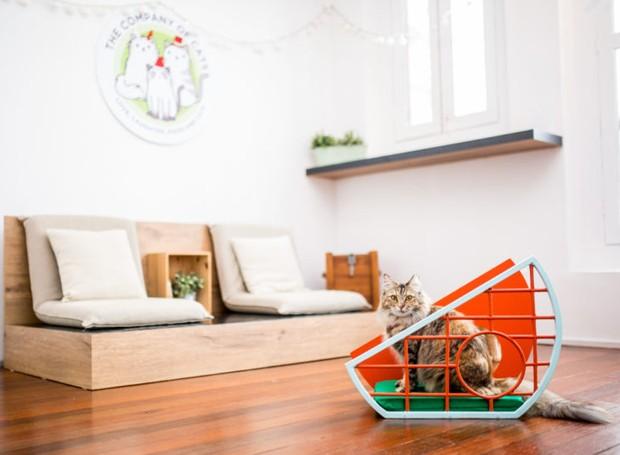 design-mobilia-para-gatos (Foto: Divulgação)