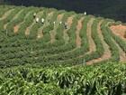 Roubos de produções agrícolas viram tema de reunião no ES