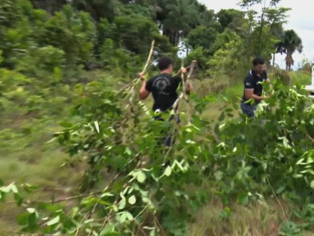 Plantação de coca foi encontrada em terrenos de Mâncio Lima, no interior do Acre  (Foto: Reprodução/TV Cruzeiro do Sul)