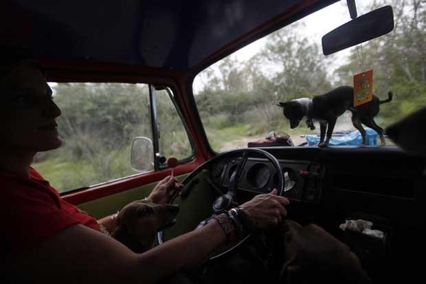 Mariam Luzcan, um advogado de cães, dirige um carro como vários cachorros na Cidade do México (Foto: Edgard Garrido/ Reuters)