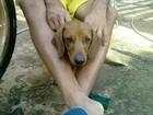 Casal de Praia Grande, SP, vai para Brasília resgatar cão perdido em voo