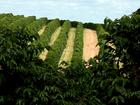 OIC informa que exportação mundial de café aumentou 1,7% em fevereiro