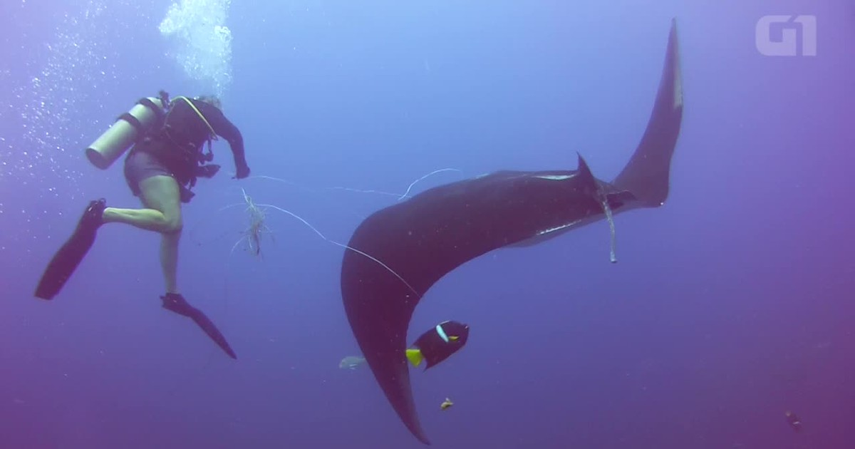 Vídeo mostra 'pedido de ajuda' de raia a mergulhador na Costa Rica