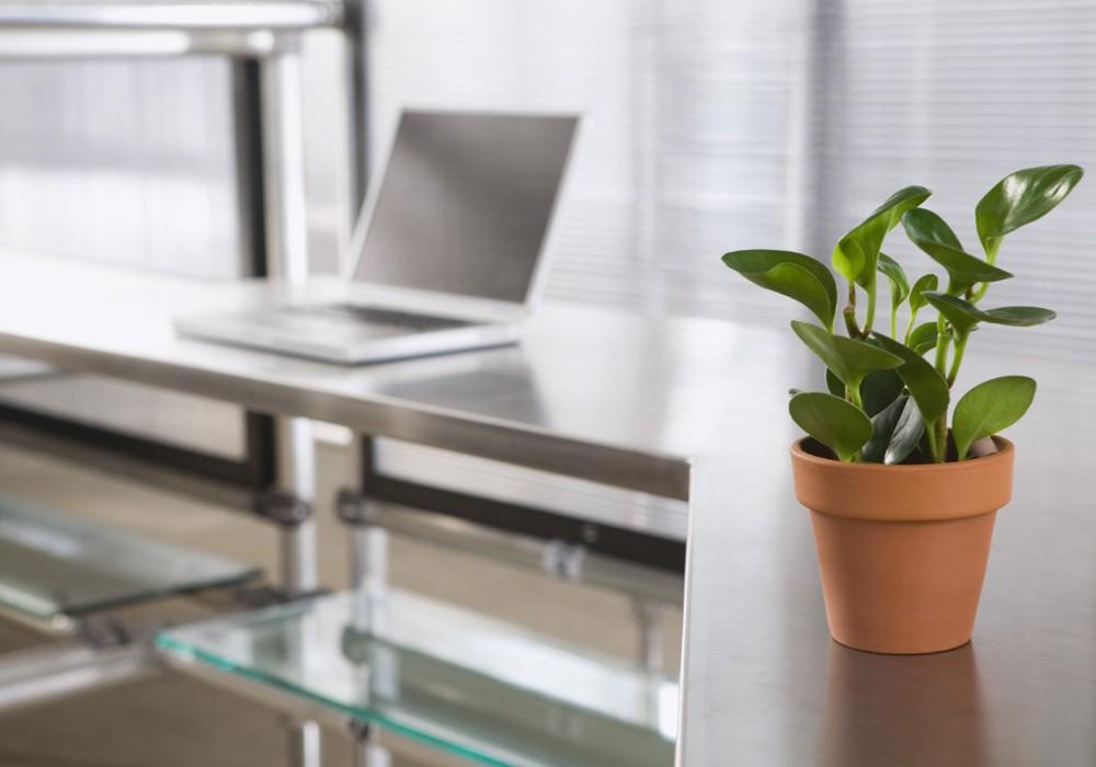 Plantas no escritório aumentam produtividade (Foto: Thinkstock)