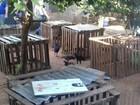 Polícia fecha rinha de galo e multa participantes em R$ 200 mil em Bauru