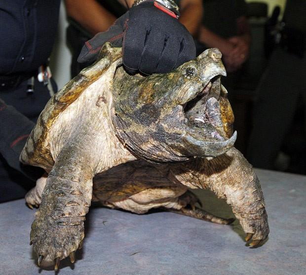 Animal foi resgatado por agentes ambientais (Foto: Reprodução/Facebook/Suffolk-County Spca)