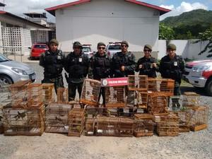 Aves foram apreendidas durante operação (Foto: Divulgação/Polícia Ambiental)