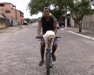 Cãozinho adora passear de bicicleta (Foto: Reprodução)