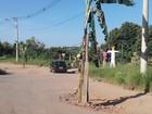 Moradores 'plantam' bananeiras em buracos como forma de protesto