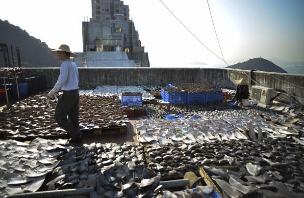 Foto mostra barbatanas sobre fábrica em Hong Kong (Foto: AFP)
