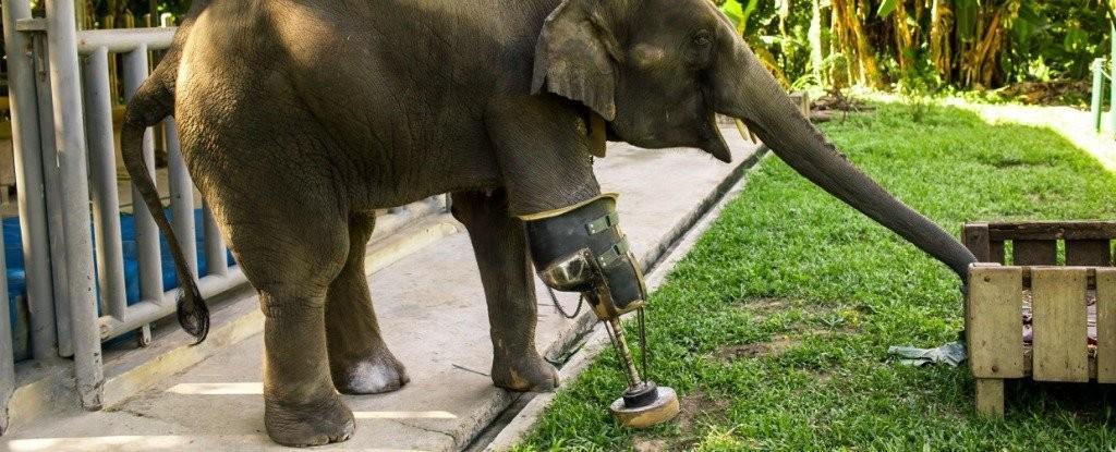 (Foto: Elephant Parade)