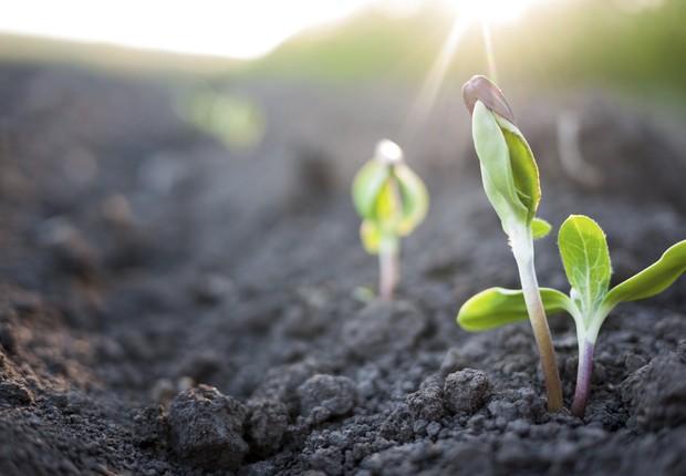 Imagem de uma planta brotando (Foto: Thinkstock )