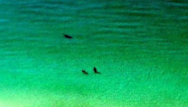 Vídeo publicado no YouTube mostra banhistas ao lado de tubarão em praia na Flórida (Foto: Reprodução/YouTube/Scott McCain)