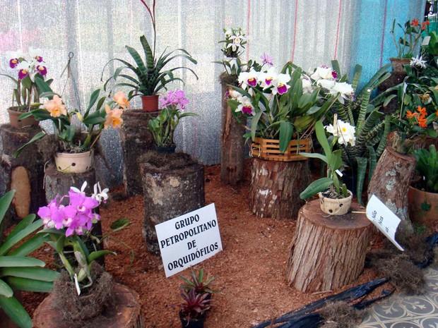 Exposição de Orquídeas e Bromélias em Petrópolis, RJ (Foto: Divulgação)