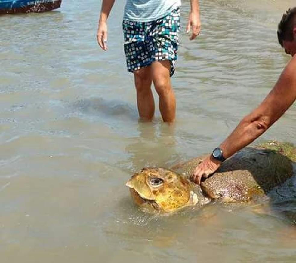 Tartaruga-cabeçuda, espécie ameaçada de extinção, é achada encalhada no litoral do Ceará (Foto: Arquivo pessoal)