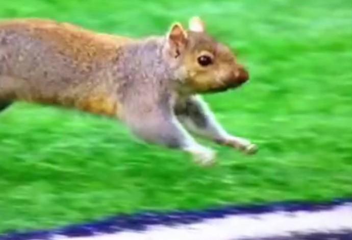 Esquilo dribla todo mundo em jogo dos Packers contra os Vikings (Foto: Reprodução)