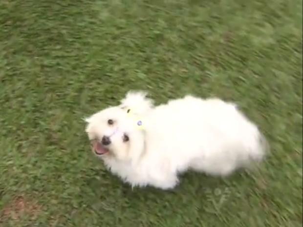 Cães possuem espaço totalmente dedicado para eles (Foto: Reprodução / TV Tribuna)