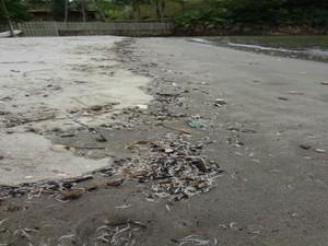 Filhotes de camarões encontrados em praia de São Sebastião na tarde de domingo (14) (Foto: Divulgação/Prefeitura de São Sebastião)