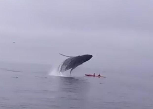 Apesar do susto, canoístas não ficaram feridos com impacto (Foto: Reprodução/YouTube/Sanctuary Cruises)