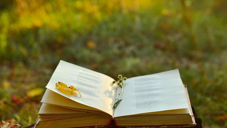 cronica-livro-poesia-mato-floresta-campo (Foto: Thinkstock)