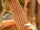 Safra brasileira de grãos deve chegar a 210,3 milhões de toneladas