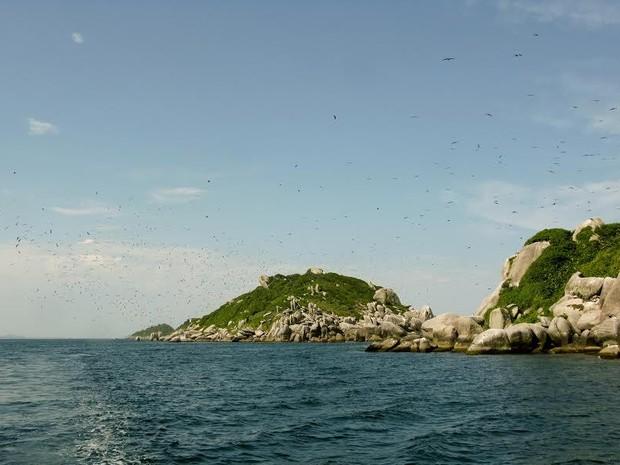 Avifauna é destaque no Arquipélago de Tamboretes (Foto: Thiago Felipe de Souza / Instituto COMAR / Divulgação)