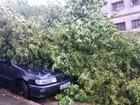 Chuva afeta trânsito e alaga ruas de  Porto Alegre nesta quinta-feira