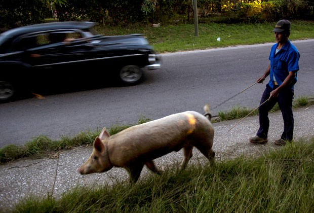 Osmar Ramirez caminha com o porco chamado  Bartolo (Foto: Ramon Espinosa/AP)