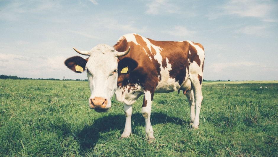 A declaração será obrigatória nos alimentos com mais de 100 miligramas (mg) de lactose para cada 100 gramas ou mililitros do produto (Foto: Pexels)