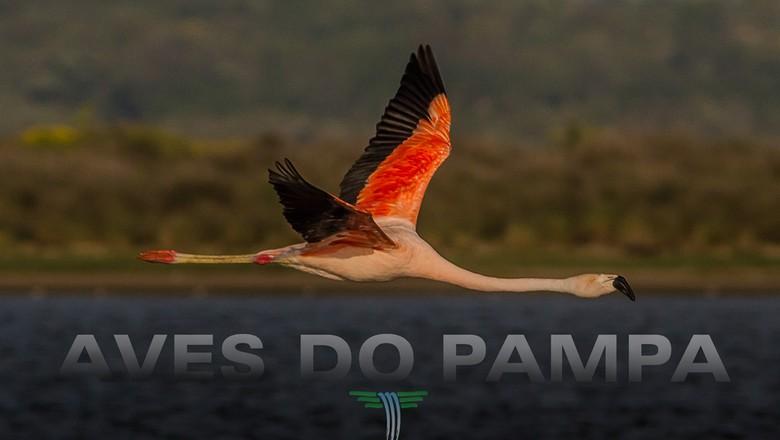 Flamingo_aves_pampa (Foto: Divulgação)
