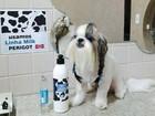 Ofurô e escova de caviar: conheça tratamentos de beleza para pets