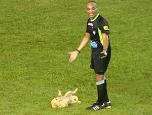 Cachorro invade o estádio Mirandão, em Araguaína (Foto: Reprodução/TV Anhanguera)