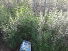 PM informa erradicação de 2,4 mil pés de erva no 'Polígono da Maconha'