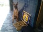 Polícia apreende 60 kg de maconha em 24 horas na BR-222, no Ceará