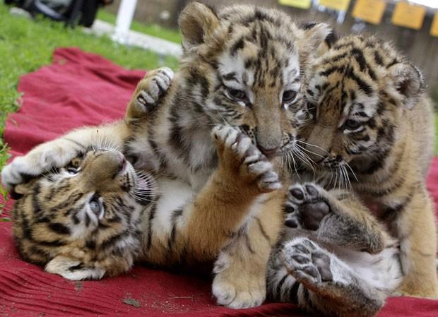 Irmãs brincam no zoo húngaro (Foto: Reuters/Stringer)