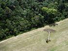 Taxa de desaparecimento de florestas registra queda desde 1990