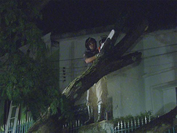 Bombeiros trabalharam para a retirada de galhos após temporal em Campinas (Foto: Reprodução EPTV)