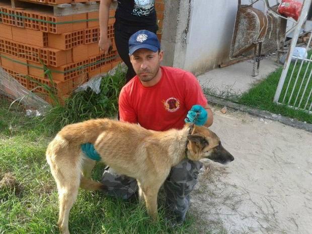 ONG ganhou apoio da Justiça e da BM para recolher animais em Santa Maria (Foto: Agasp/Divulgação)