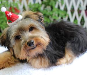 O cãozinho Ned pronto para curtir uma festa de Natal exclusiva para pets (Foto: Divulgação)