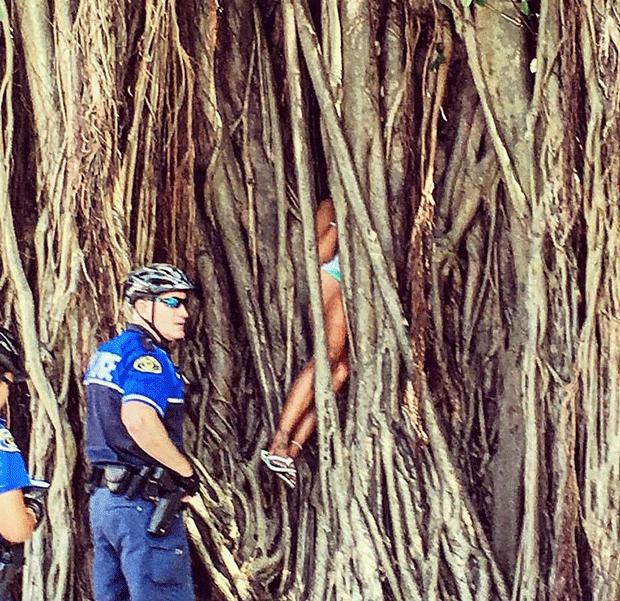 Policiais resgatam mulher que ficou presa em árvore gigante na Flórida (Foto:  Key West Police Department/Facebook)