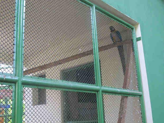Durante o período de obras, uma arara-canindé nasceu no parque (Foto: Mônica Basile/G1)