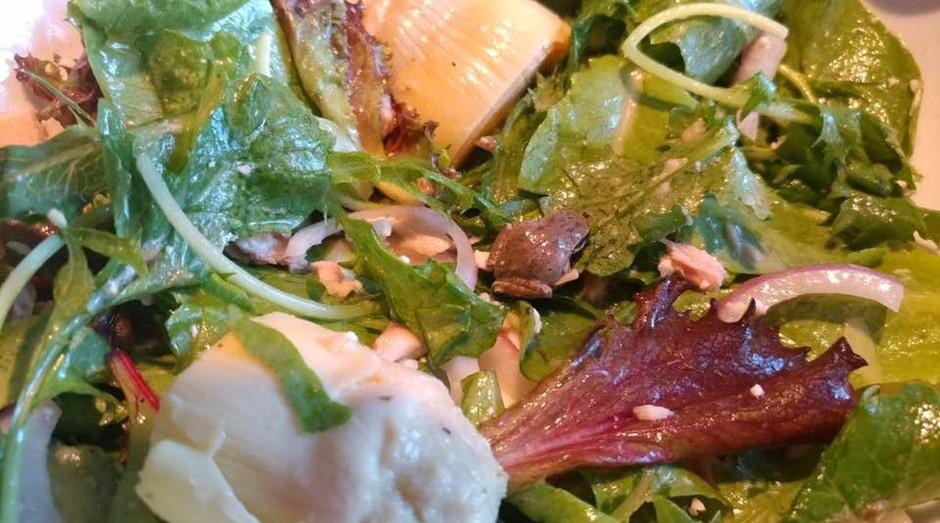 Becky Garfinkel encontrou a rã em salada (Foto: Reprodução)