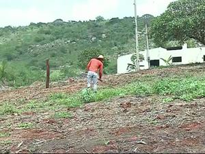Agricultores sofrem com a seca em Santa Cruz da Baixa Verde (Foto: Reprodução/TV Asa Branca)