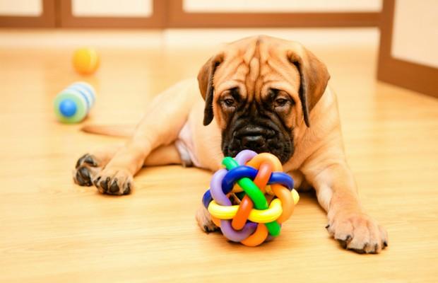 Brinquedos interativos ajudam a aliviar o estresse causado pela solidão   (Foto: Divulgação )