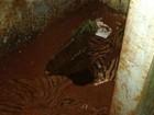 Sete presos fogem por túnel aberto na Casa de Custódia de Londrina, no PR
