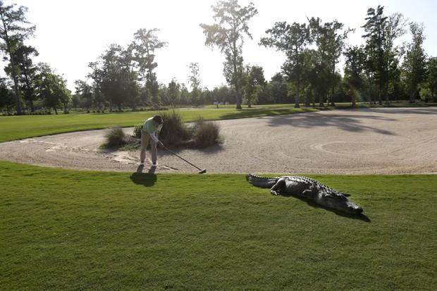 Funcionário tenta espantar o jacaré do campo de golfe (Foto: Gerald Herbert/AP)