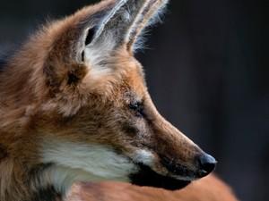 Fotos ilustram livro Histórias de um lobo (Foto: Adriano Gambarini/Divulgação)